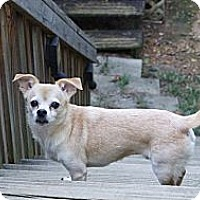 Adopt A Pet :: Chewy (Courtesy List) - Richmond, VA