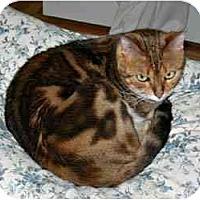 Adopt A Pet :: Sheba And Tigger - Redwood City, CA
