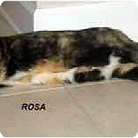 Adopt A Pet :: Rosa - Jacksonville, FL