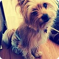 Adopt A Pet :: Skylar - Encinitas, CA