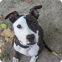 Adopt A Pet :: Crescent - Memphis, TN