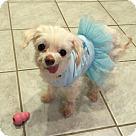 Adopt A Pet :: XP Lexi - Denville, NJ