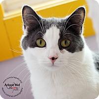 Adopt A Pet :: Debbie - Lyons, NY