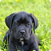 Adopt A Pet :: Basil - Virginia Beach, VA