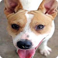 Adopt A Pet :: ELMO - Fort Walton Beach, FL