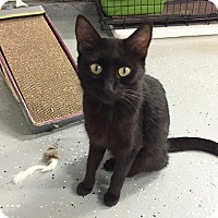 Adopt A Pet :: Lily - Lombard, IL