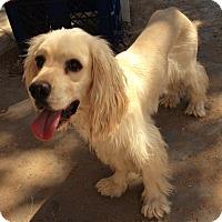 Adopt A Pet :: Joe - Las Vegas, NV