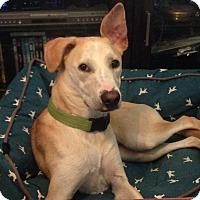 Adopt A Pet :: Mollie - Destrehan, LA