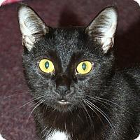 Adopt A Pet :: Artemis - North Branford, CT