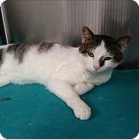 Adopt A Pet :: Gunther - Covington, KY