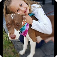 Adopt A Pet :: Natala - Ft. Lauderdale, FL