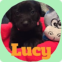 Adopt A Pet :: Lucy - Rexford, NY