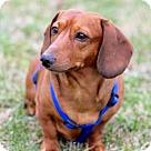 Adopt A Pet :: RALEIGH