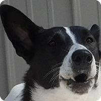 Adopt A Pet :: Bisquit - MINNEAPOLIS, KS