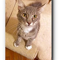 Adopt A Pet :: Prince - Wichita, KS