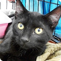 Adopt A Pet :: Percy - Castro Valley, CA