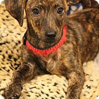 Adopt A Pet :: Guest Dog - Kohler - Decatur, GA
