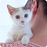 Adopt A Pet :: Cassie - Huntsville, AL
