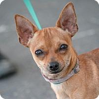 Adopt A Pet :: Bennie - Palmdale, CA