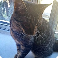 Adopt A Pet :: Charming - Toronto, ON