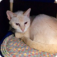 Adopt A Pet :: Frosty - Lunenburg, MA