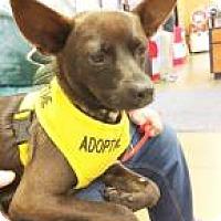 Adopt A Pet :: Diesel - Durham, NC
