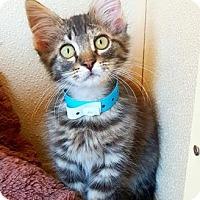 Adopt A Pet :: Farley - Fredericksburg, TX