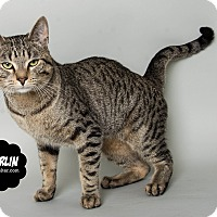 Adopt A Pet :: Merlin - Wyandotte, MI
