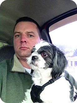 Shih Tzu Dog for adoption in Hazard, Kentucky - Corrie