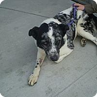 Adopt A Pet :: Zelda - Orange Cove, CA