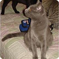 Adopt A Pet :: Berkeley - Chesapeake, VA