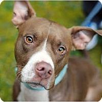 Adopt A Pet :: Toni - Reisterstown, MD