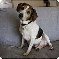 Adopt A Pet :: Auggie-Doggie - Phoenix, AZ