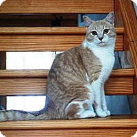 Adopt A Pet :: Freddie - N. Berwick, ME