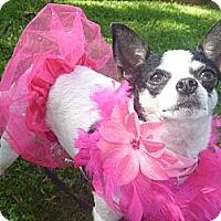 Adopt A Pet :: Blushie - West Hills, CA