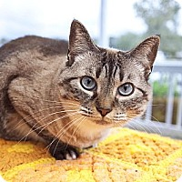 Adopt A Pet :: Iris - Chesapeake, VA