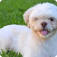 Adopt A Pet :: *Nate - PENDING - Westport, CT