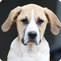 Adopt A Pet :: Barnaby - Providence, RI