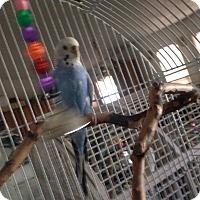 Adopt A Pet :: Ping - Orlando, FL