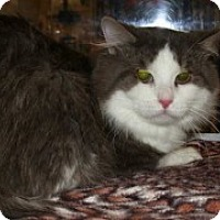 Adopt A Pet :: Bentley - McHenry, IL