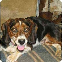 Adopt A Pet :: Suzie - Lincolndale, NY