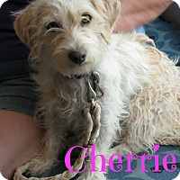 Adopt A Pet :: Cherrie - Scottsdale, AZ