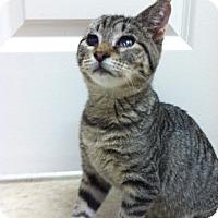Adopt A Pet :: Jenny - Trevose, PA