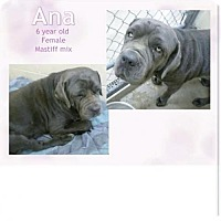 Adopt A Pet :: Ana - Indianapolis, IN