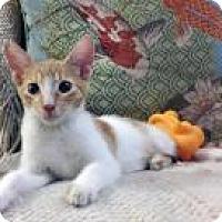 Adopt A Pet :: Fritz - Mission Viejo, CA