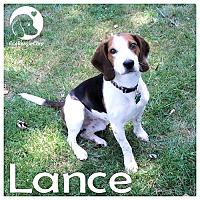 Adopt A Pet :: Lance - Novi, MI