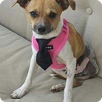 Adopt A Pet :: Sid - Oakley, CA