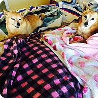 Adopt A Pet :: Gorgeous Kiki n Jumbo - Corona, CA