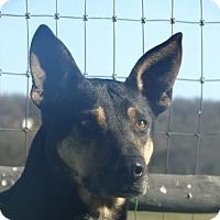 Adopt A Pet :: Jackson - Vacaville, CA