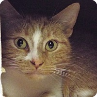 Adopt A Pet :: Mango - Grants Pass, OR